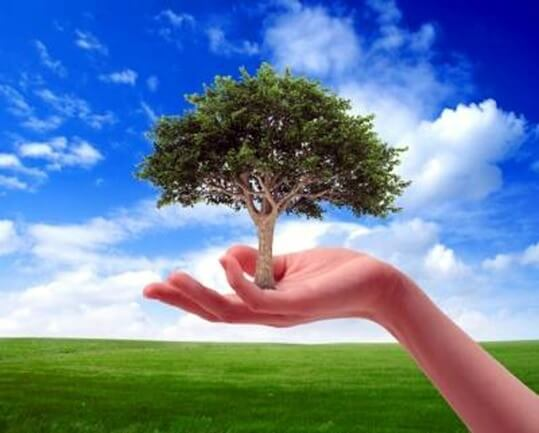 Image relating to caring for environment: a hand holding a tree